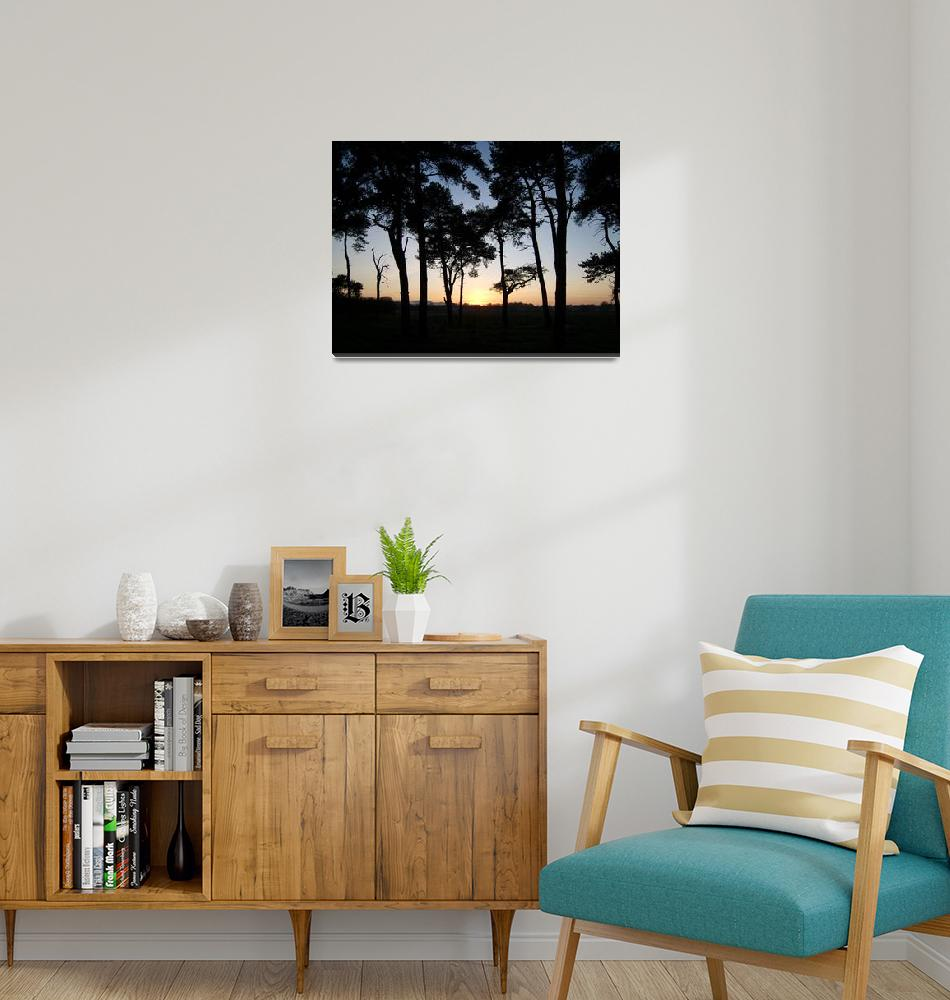 """""""sunset and Scots Pines""""  by Wildcam"""