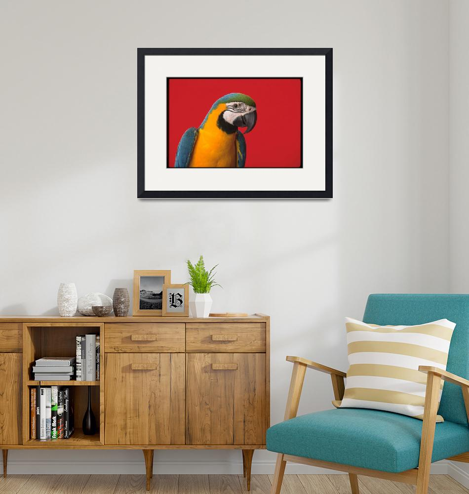 """""""parrot""""  (2002) by atlasphotographic"""