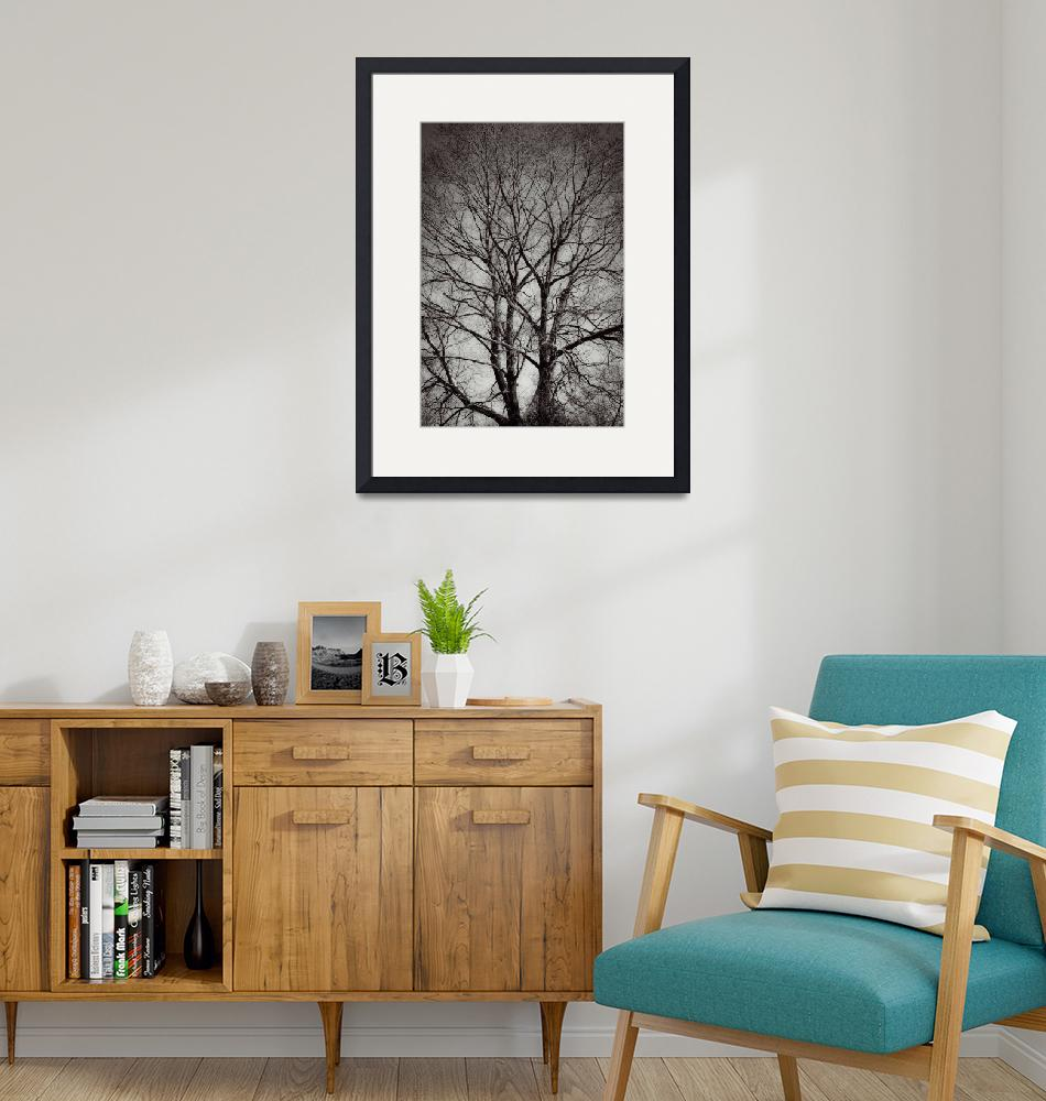 """""""Artistry Of Tree Branches Black And White""""  (2014) by MissDawn"""