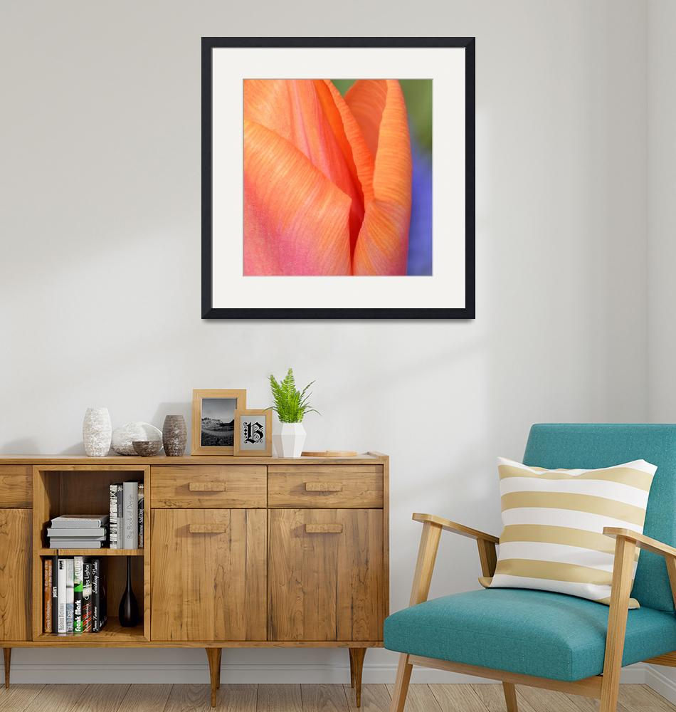 """""Pink Orange Tulip 9"" #9042315.0732 (2)""  (2015) by achimkrasenbrinkart"