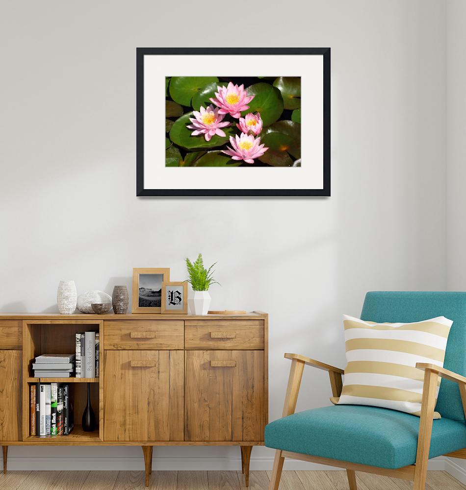"""""""Pink Water Lilies""""  (2009) by FordLou"""
