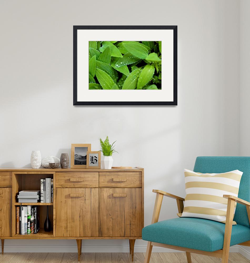 """""""Backyard Lily Leaves in Winter""""  (2014) by dgately"""