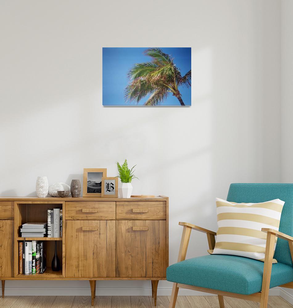 """Palm Tree""  (2012) by angusmcnitt"