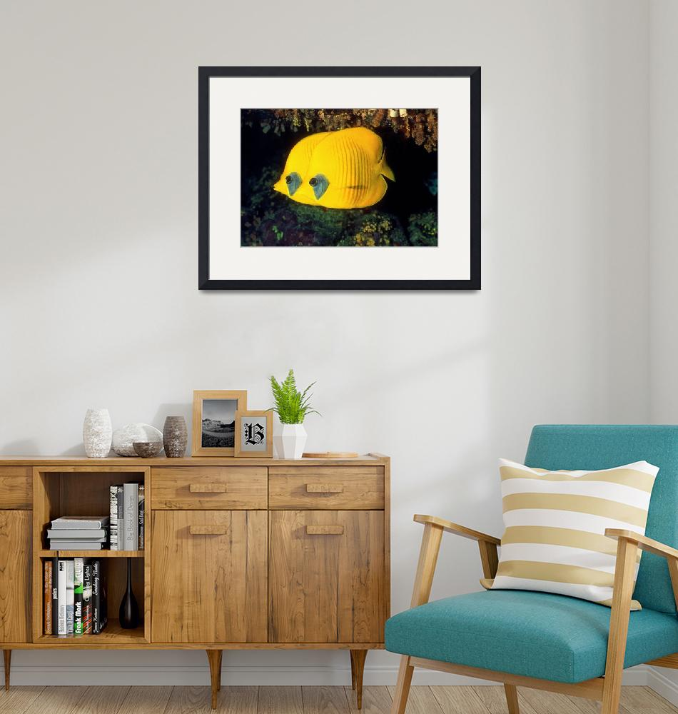 """""""A Pair of Yellow Disk Fish""""  (1995) by JoaoPonces"""