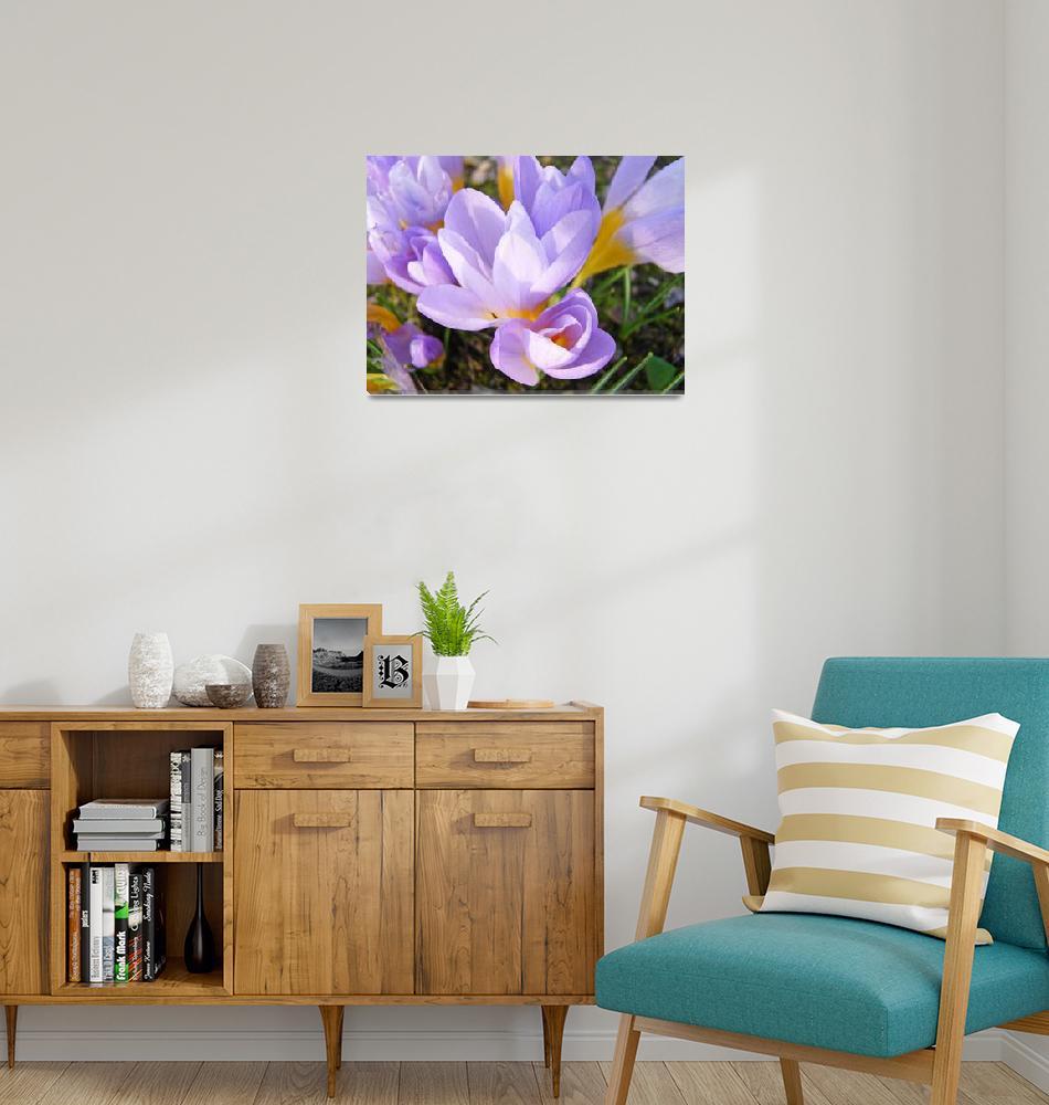 """Crocus Flowers Spring Art Prints Lavender Yellow""  (2014) by BasleeTroutman"
