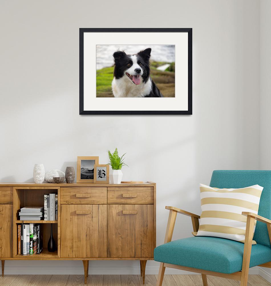 """""""Border Collie on Shore""""  (2020) by pix4japan"""