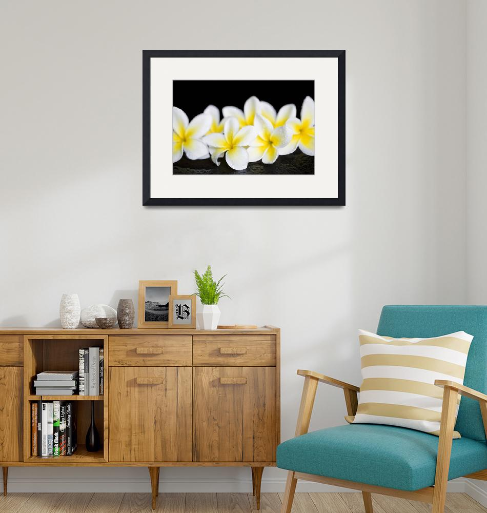 """Plumeria obtusa Singapore White""  (2015) by sharonmau"