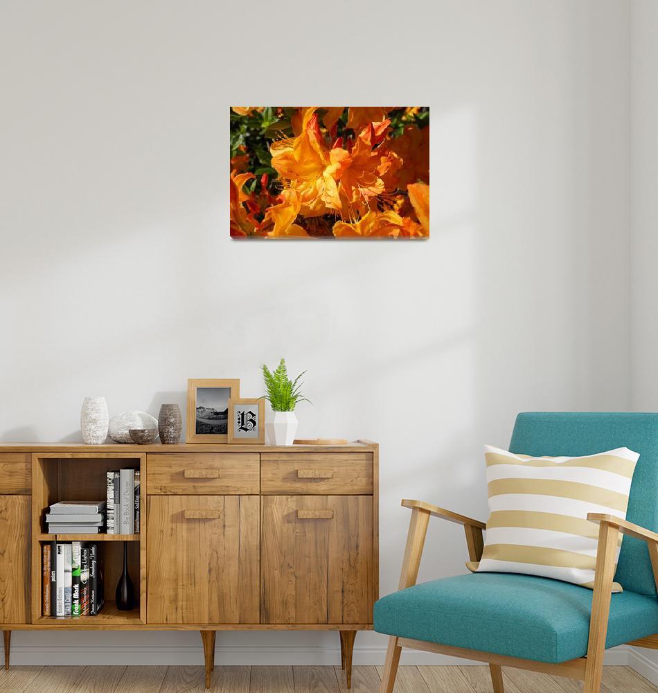 """Rhodies Orange Art Rhododendrons Flowers Prints""  (2014) by BasleeTroutman"