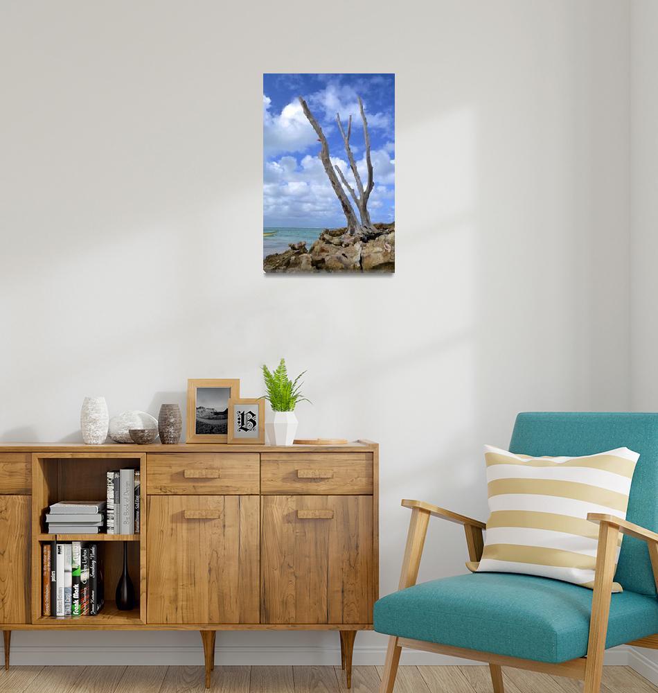"""Beach Tree 1""  (2014) by JokrG"