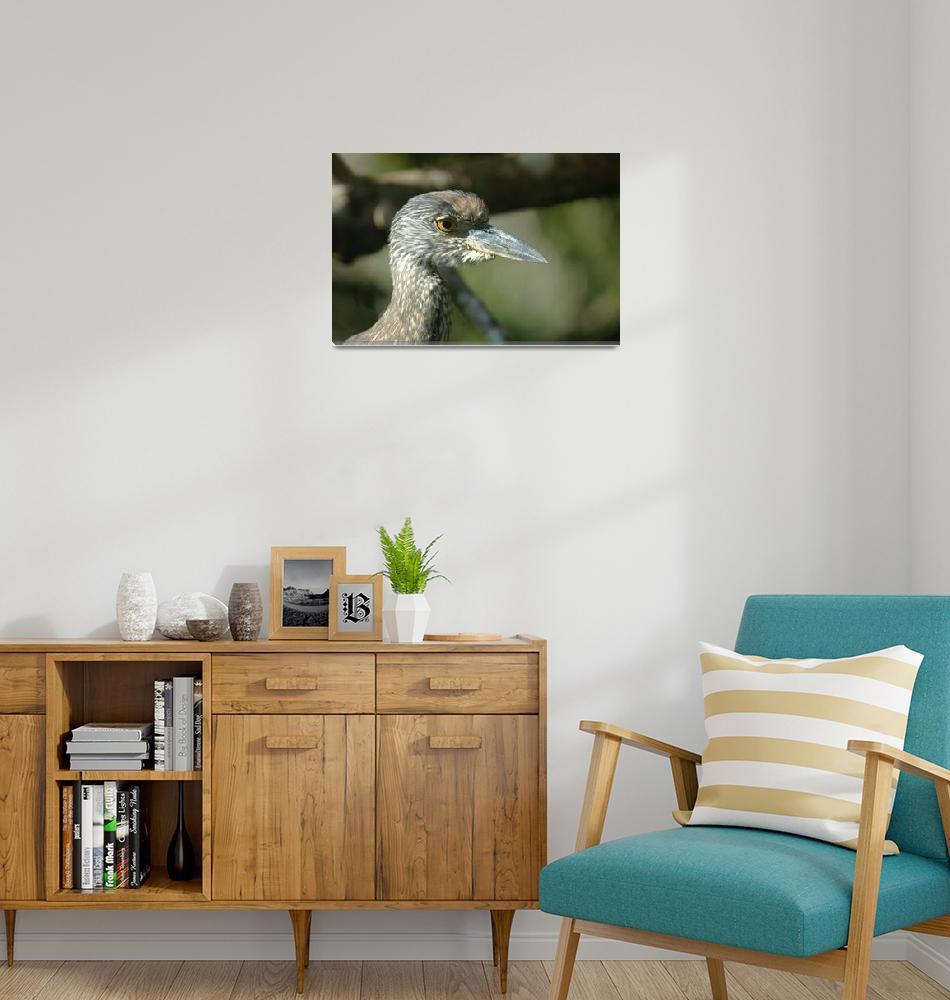 """Juvenile little blue heron with an attitude""  (2005) by VixEye"