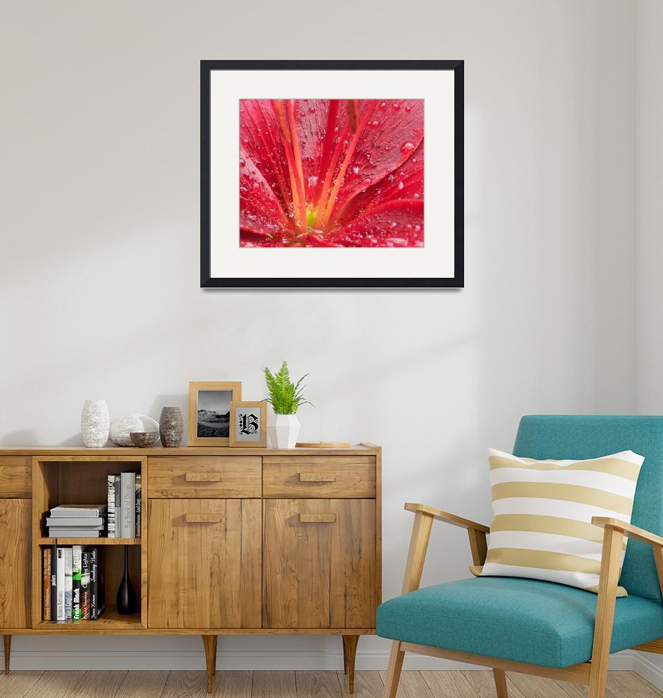 """""""Rainy Day Red Day Lily""""  (2008) by MJKeller568"""