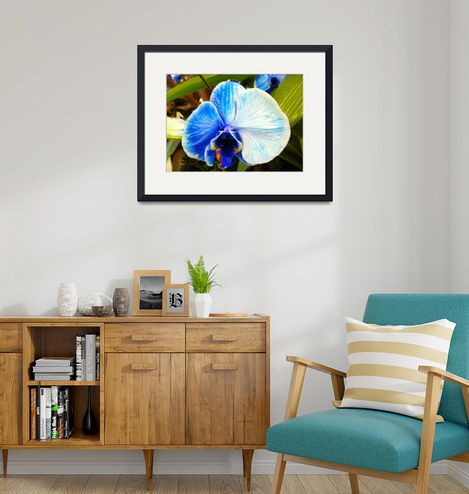"""""""Blue Orchid""""  (2014) by heeltote"""