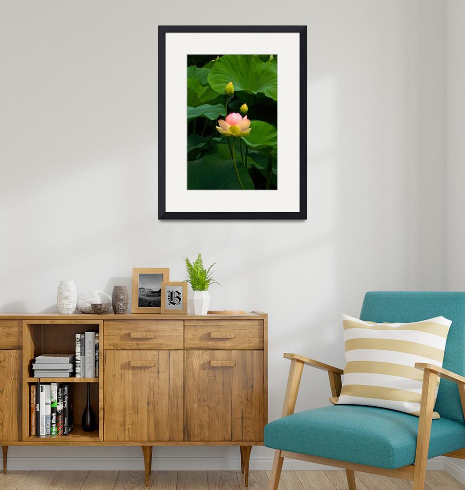 """""""Lovely Lotus Tall View""""  (2013) by LightHeart"""