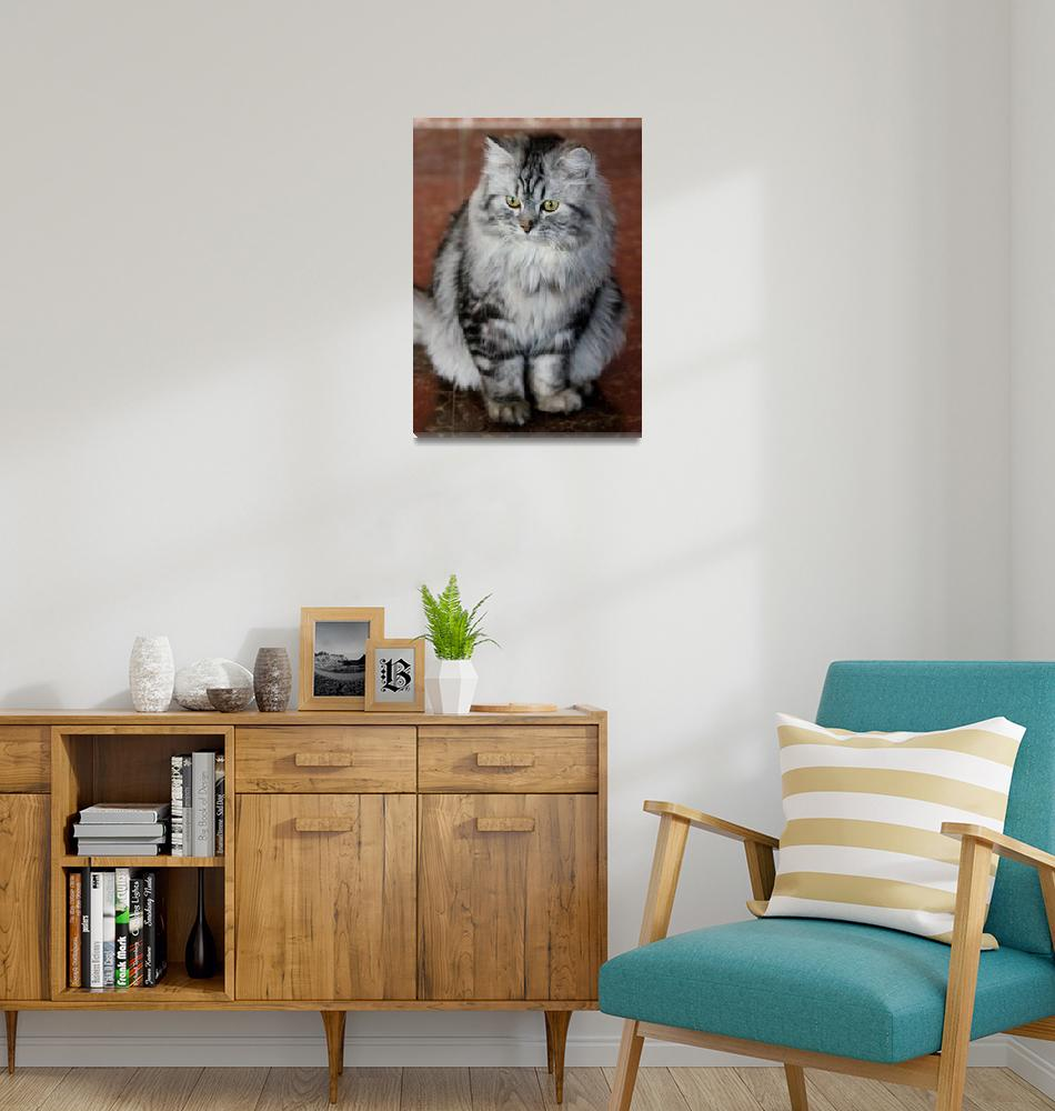 """Bear Cat""  (2012) by belinda_baardsen"