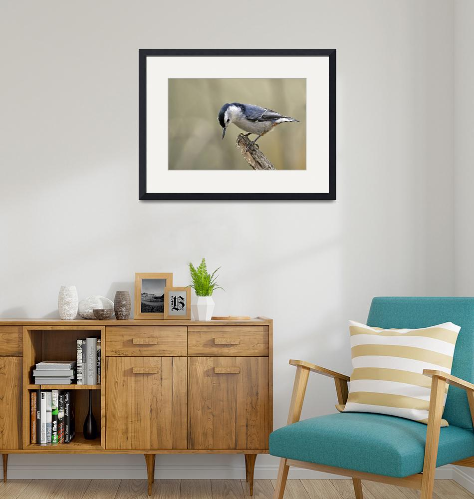 """""""White Breasted Nuthatch, Side View""""  (2010) by LauraM"""