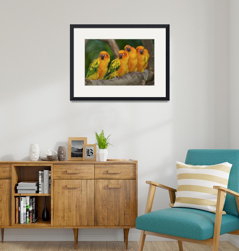 """Sun Conures""  (2008) by souvikb"