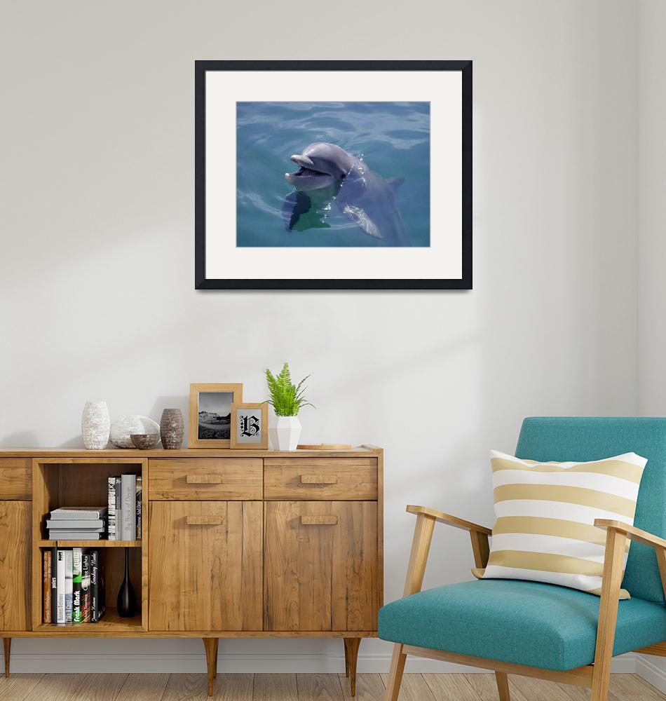 """""""Smiling Dolphin""""  by dduhaime55"""