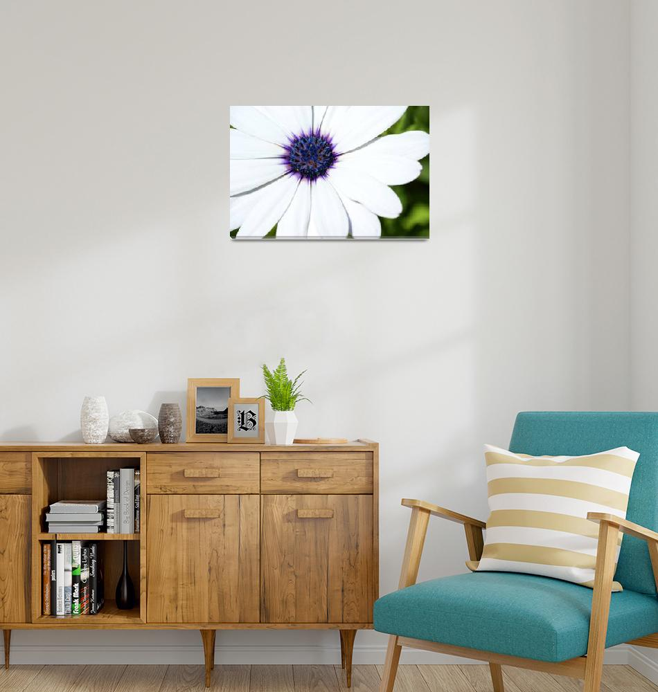 """""""White Daisy""""  (2006) by ispyimagination"""