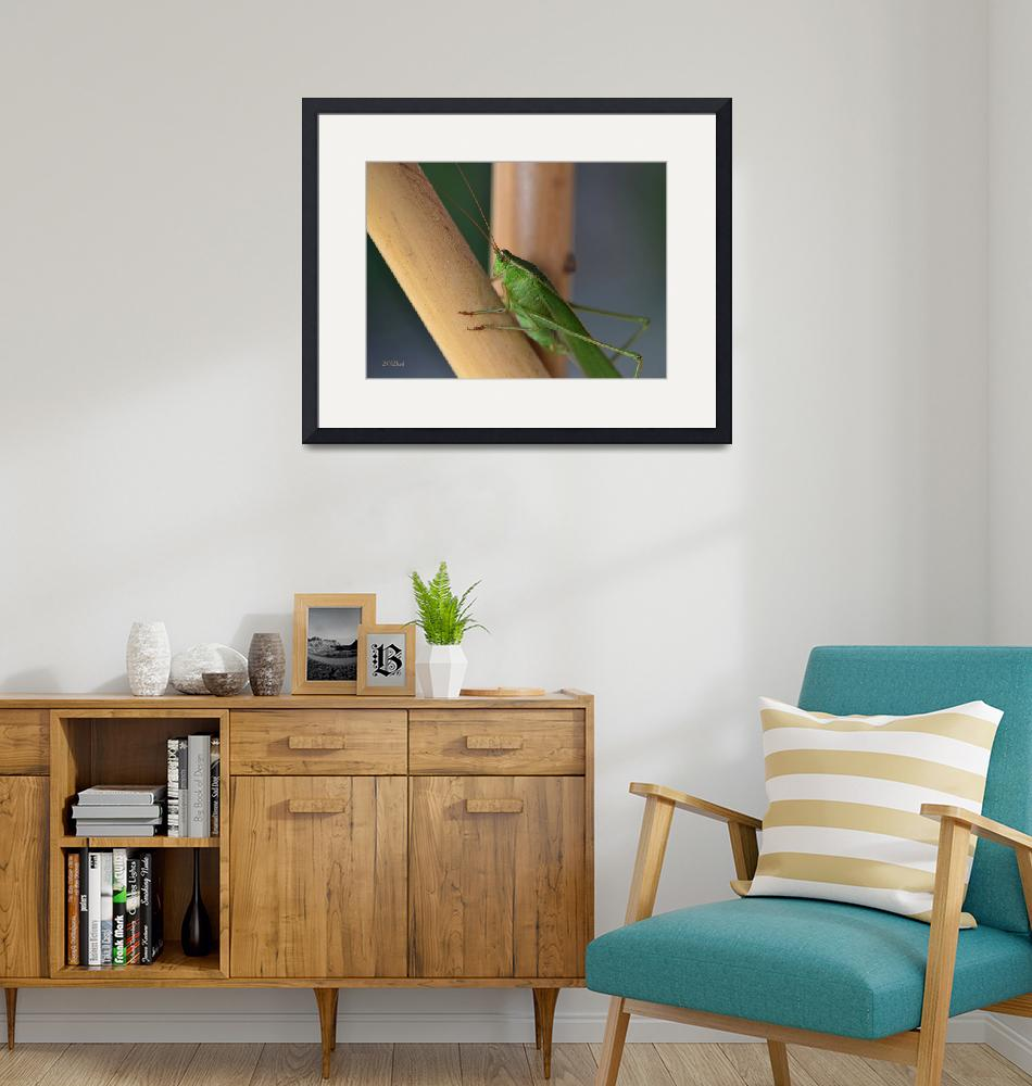 """""""Katydid Resting on Bamboo""""  (2012) by theblueplanet"""