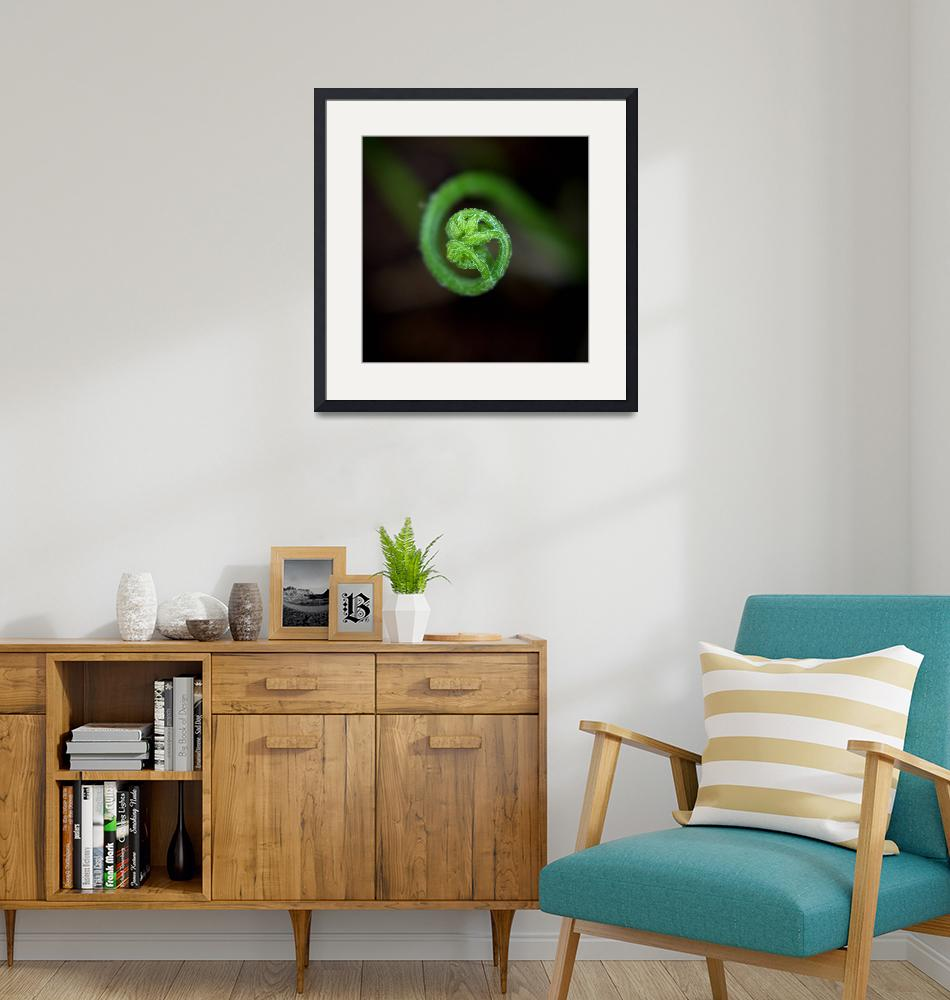 """""""Fern Frond""""  by Mike_Bartley"""