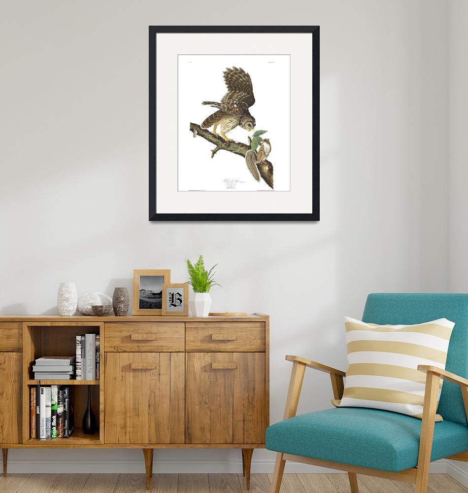 """""""Barred Owl, Plate 46"""" by FineArtClassics"""