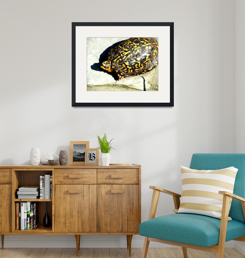 """Box Turtle""  (2009) by Kimmary"