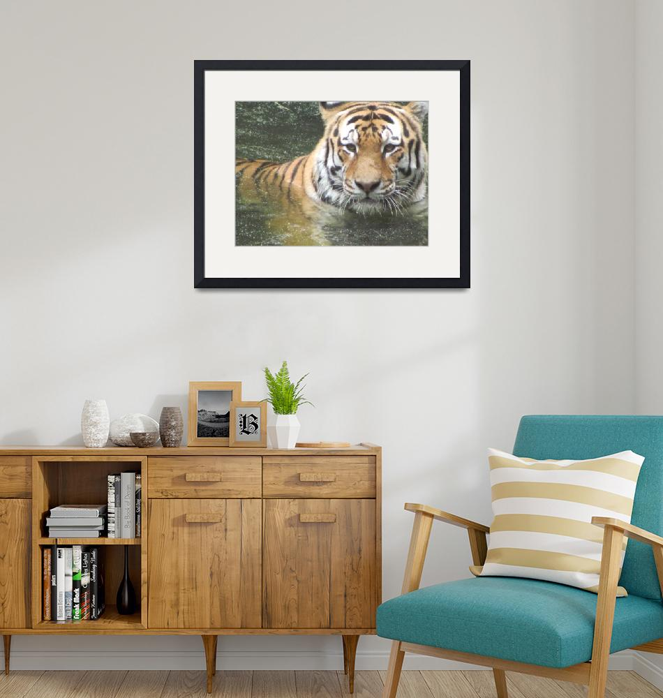 """""""Tiger Cooling Off""""  (2010) by JerryBlagg"""