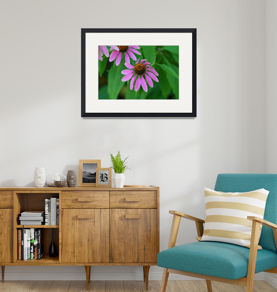 """Purple Coneflower  Echinecea""  (2012) by KsWorldArt"