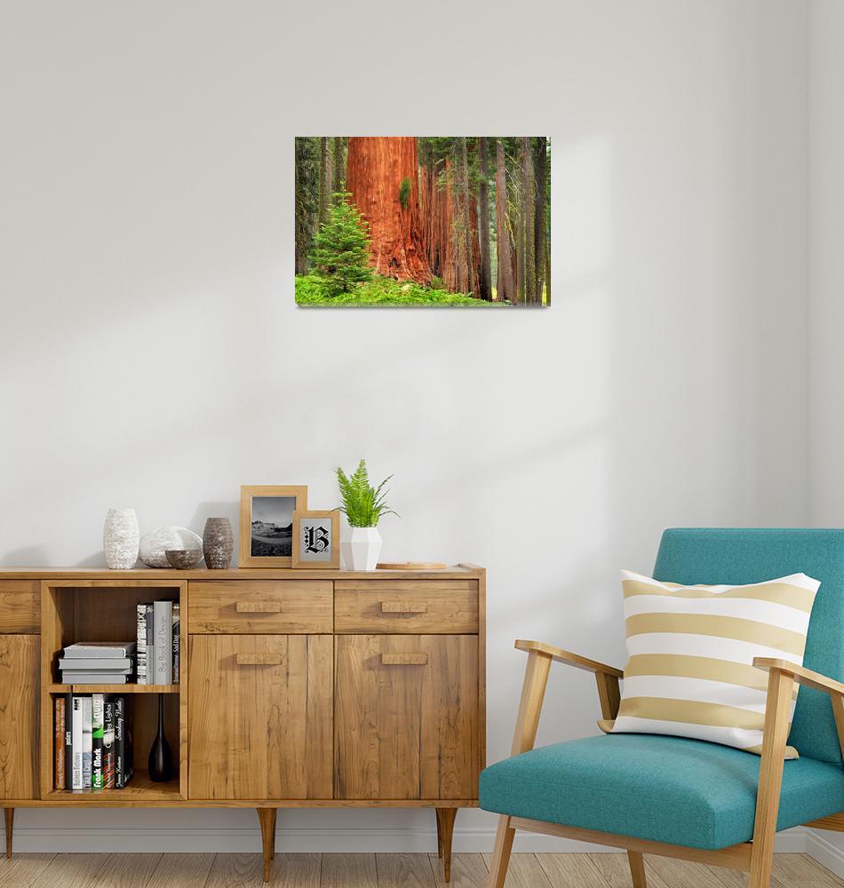 """Sequoia Grove""  (2008) by Inge-Johnsson"