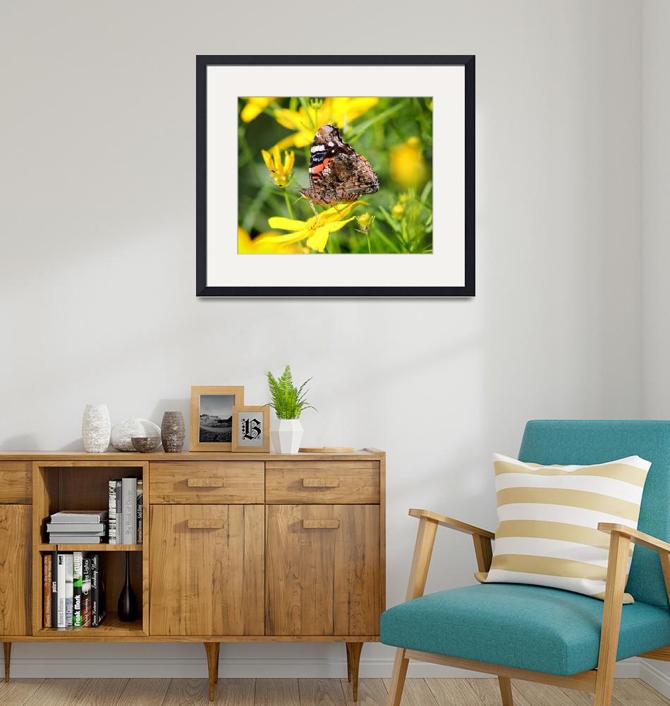 """""""Red Admiral Butterfly on Yellow Coreopsis""""  (2014) by KsWorldArt"""