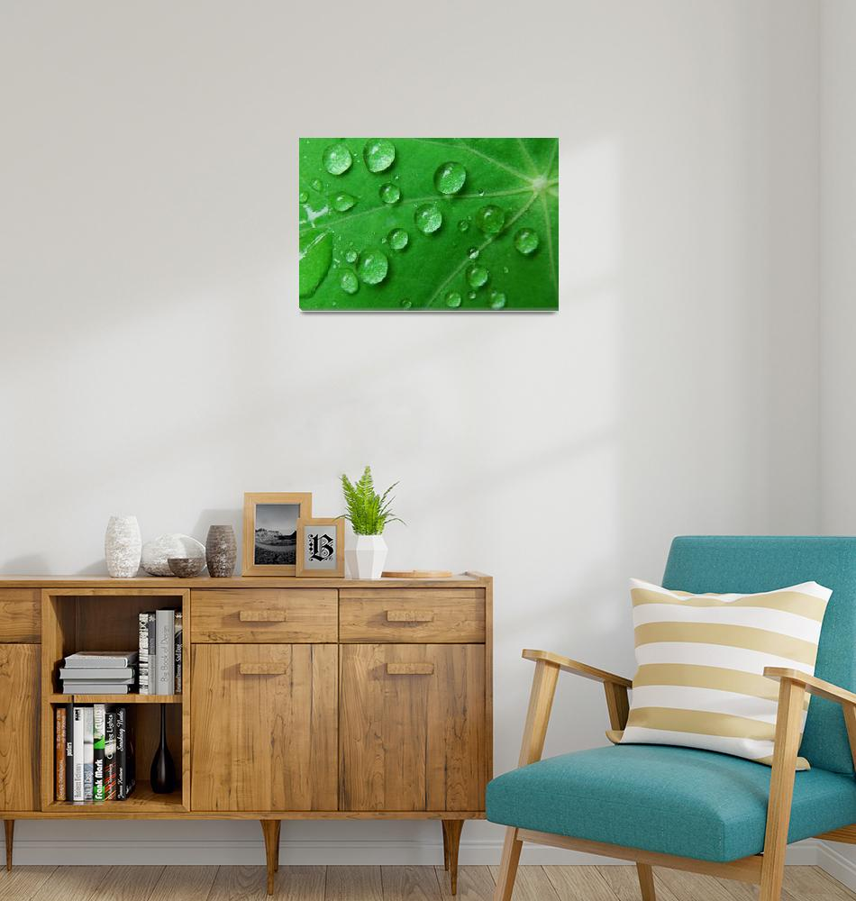 """""""Water Drops Rain Green Leaf, Ucluelet, Vancouver I""""  by toddbush"""