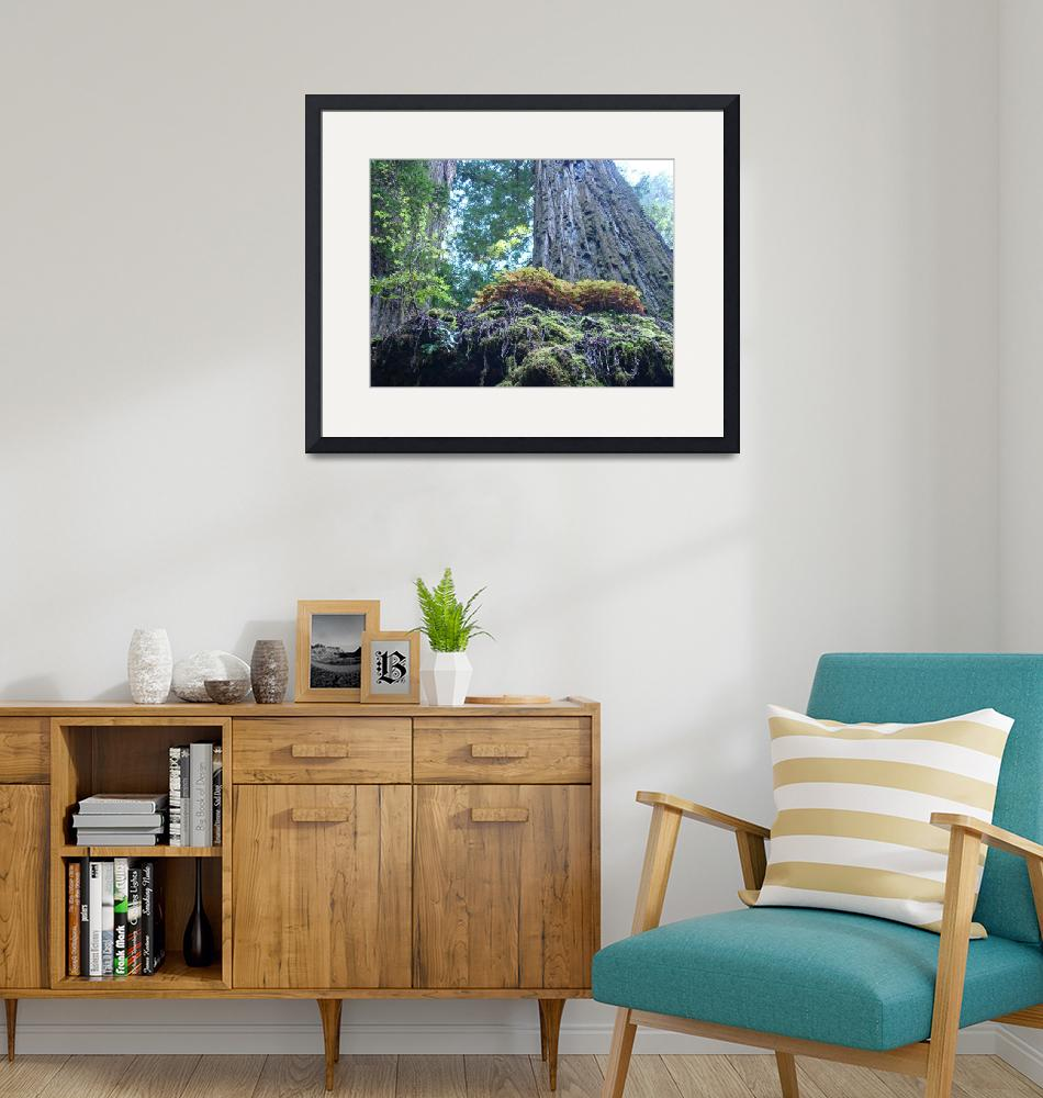 """""""Redwood Tree Forest art prints Redwoods""""  (2012) by BasleeTroutman"""
