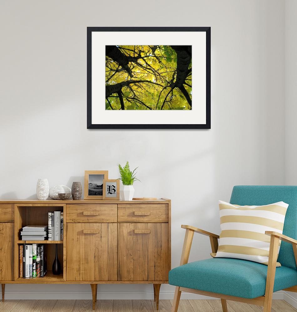 """""""Norway Maple""""  (2008) by 4ember"""