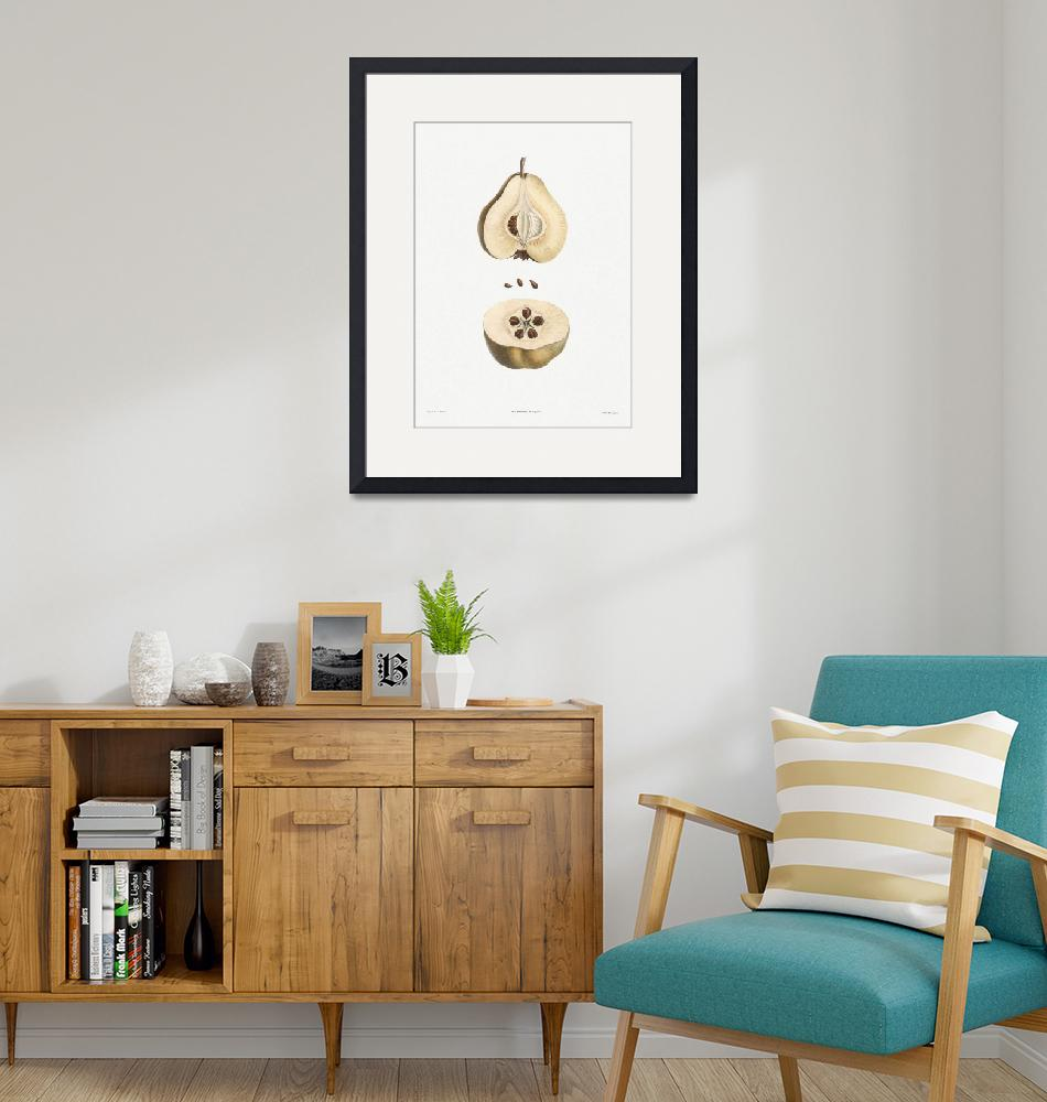 """""""Pear Fruit Cross Section Vintage Botanical""""  by FineArtClassics"""