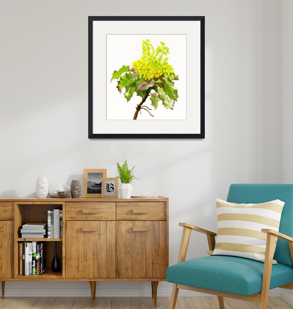 """""""Oregon Grape Flowers white background""""  (2016) by Pacific-NW-Watercolors"""