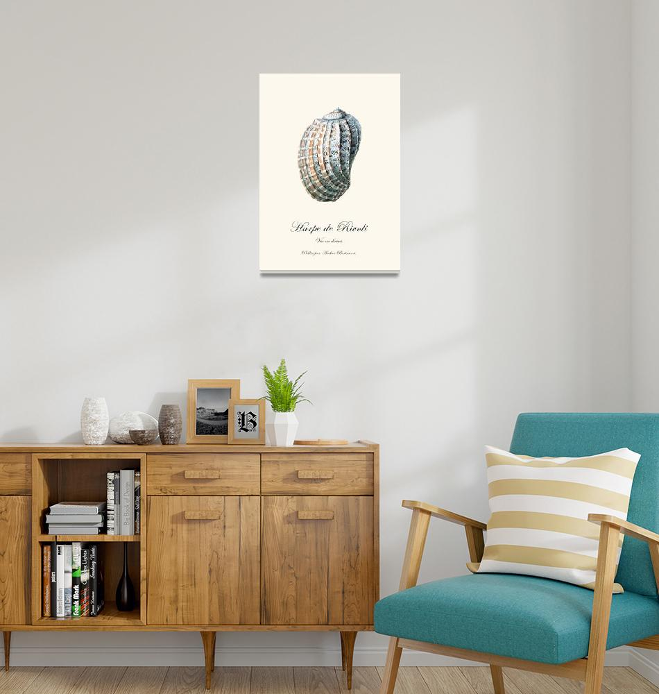 """Sea shell harpe vintage poster natural history""  (2012) by Lebonvintage"