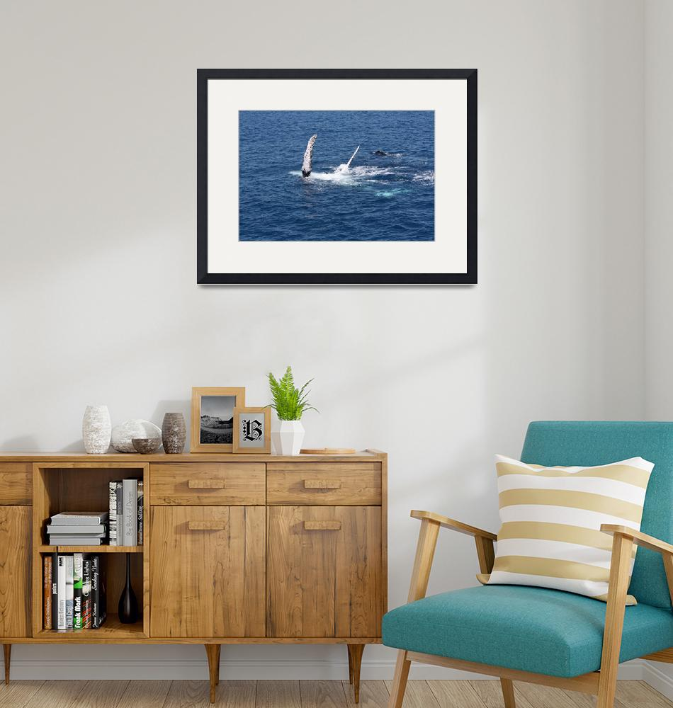 """""""NaP_ Whale Watching149""""  by nevilleprosser"""