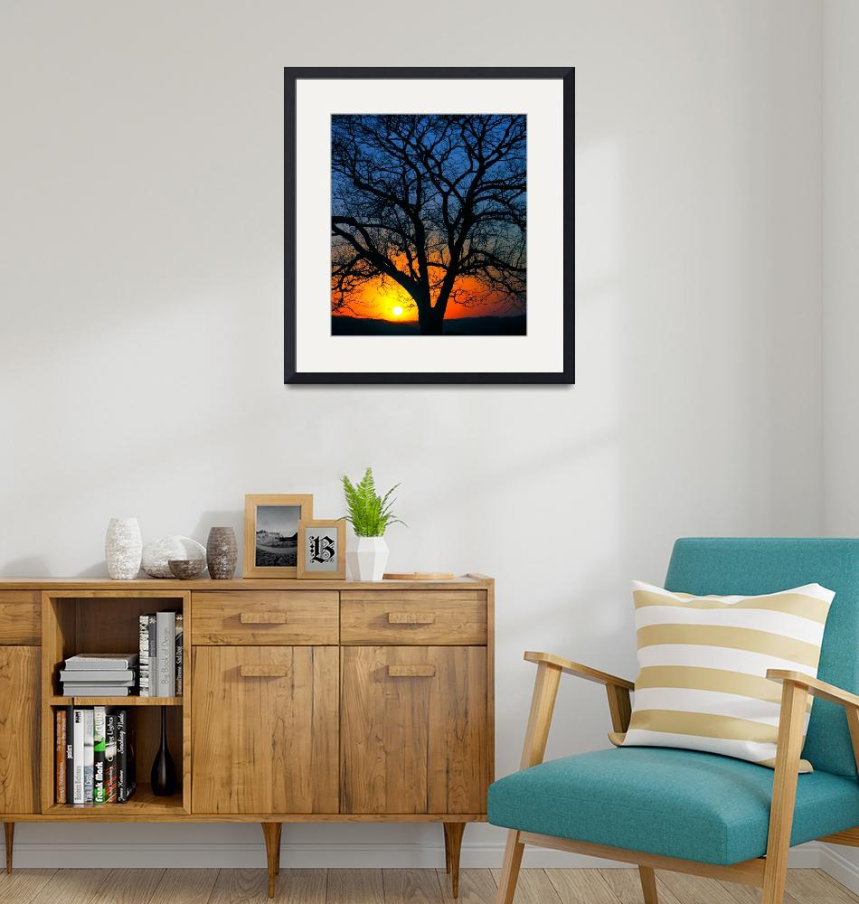 """""""another sunset, another tree""""  (2005) by joaobambu"""