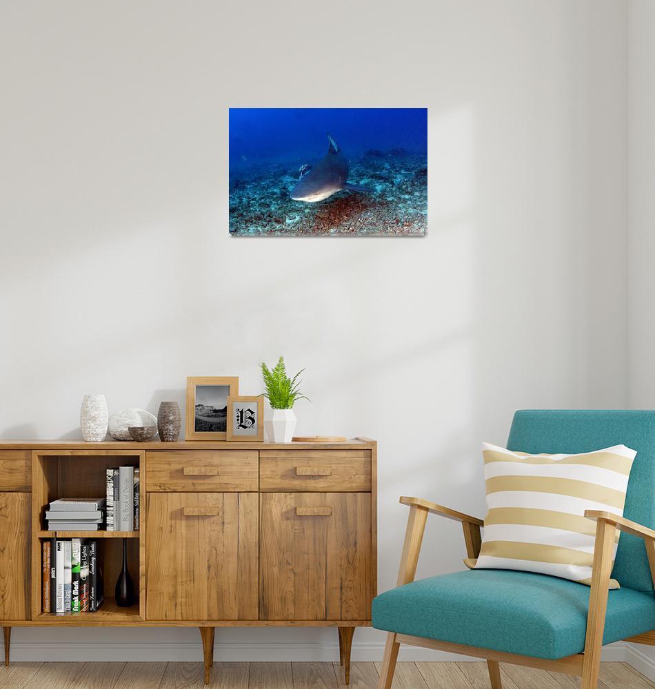 """Shark Encounter""  (2011) by The_World_Underwater"