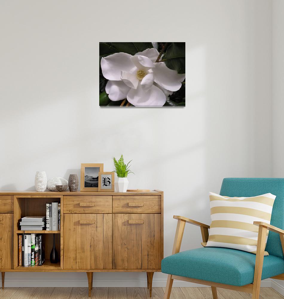 """White Magnolia""  (2006) by bettymackey"