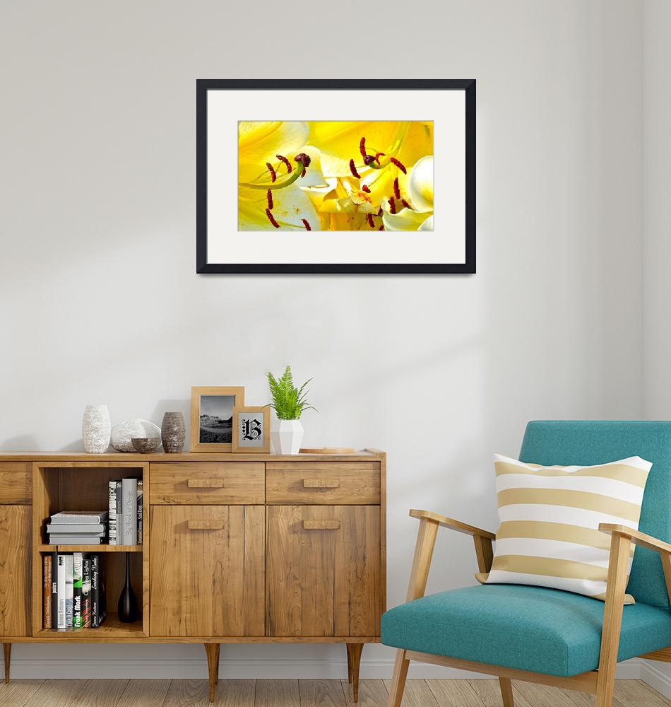 """""""Yellow Lilys""""  (2014) by TimPoole"""