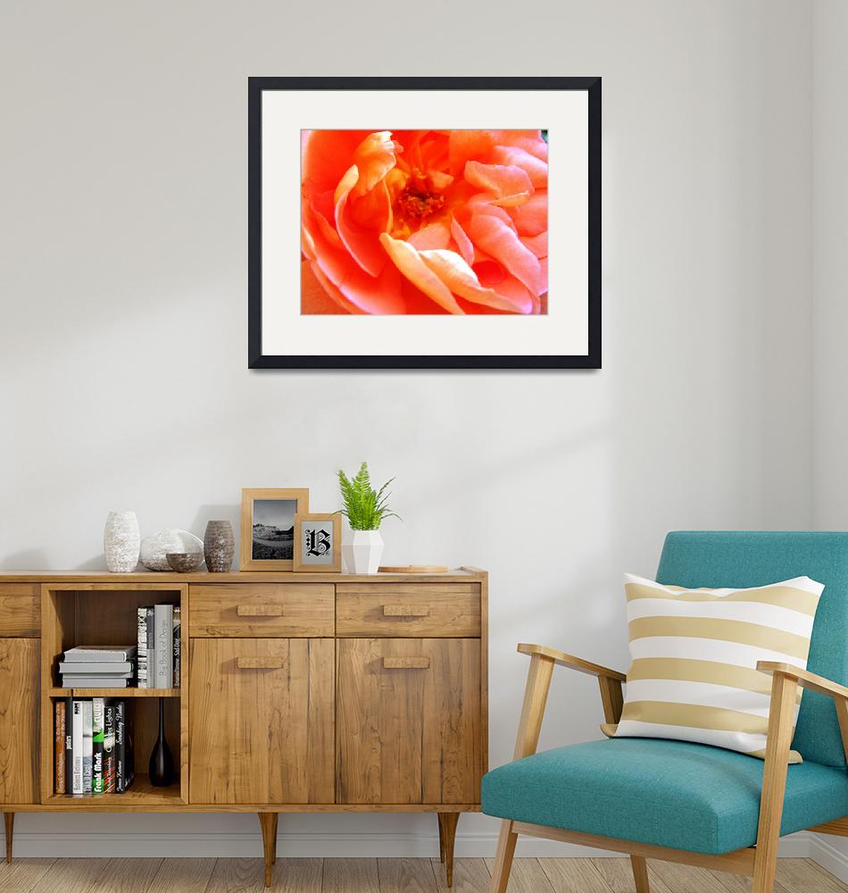 """""""Orange Blossom - Love this rose!""""  by MikeDargaPhotography"""
