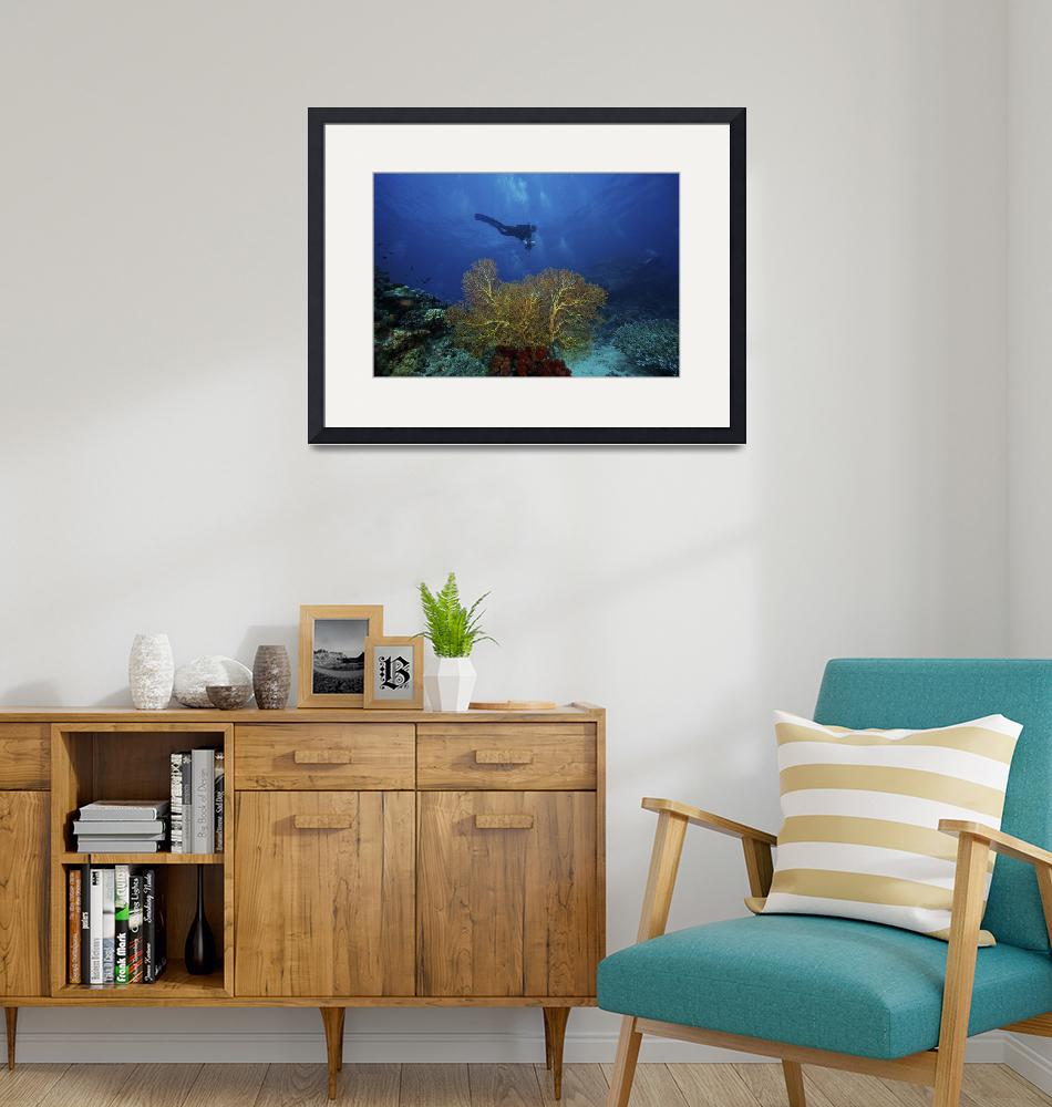 """""""A scuba diver swims past a large yellow gorgonian""""  by stocktrekimages"""
