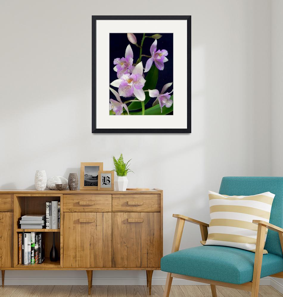 """""""Orchid Dance""""  (2007) by Mylene"""