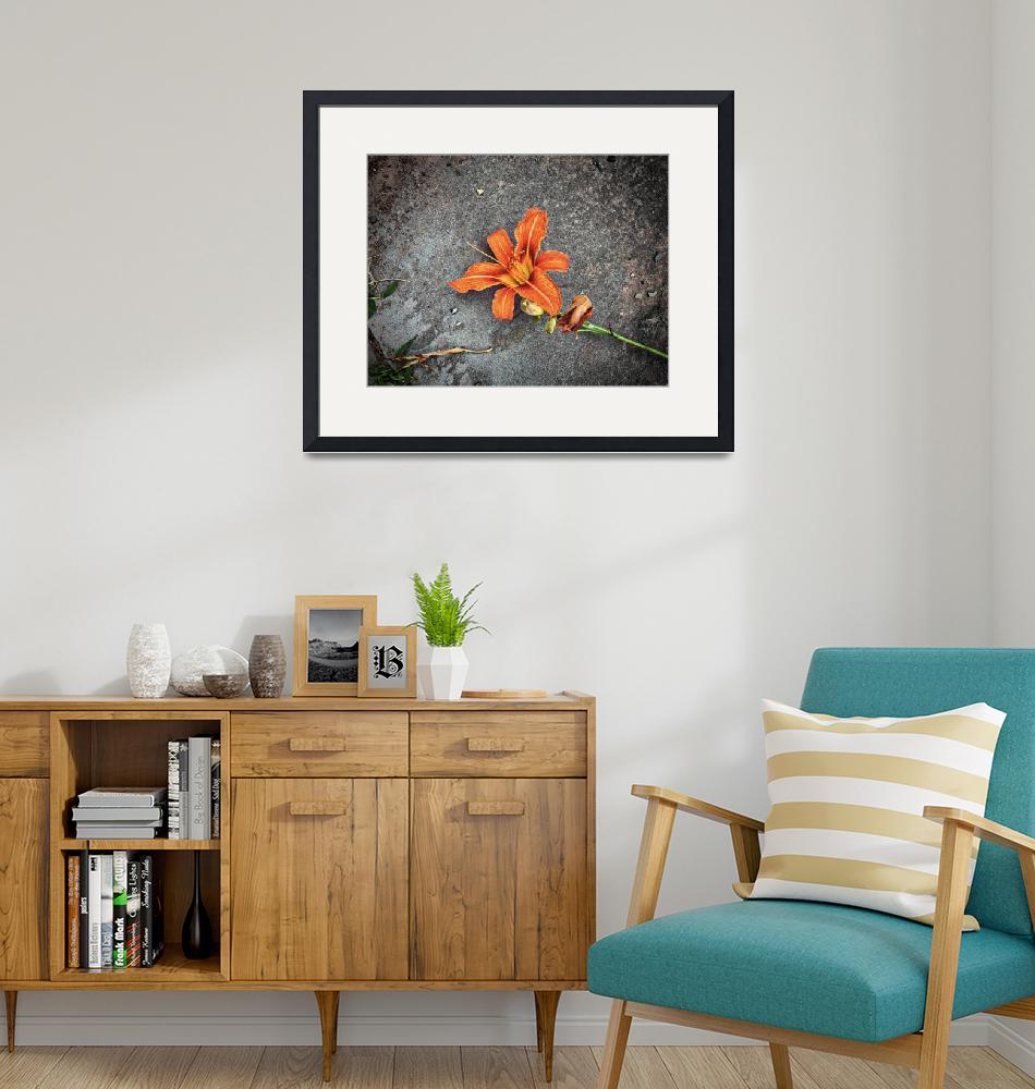 """Tiger Lily on the Pavement Wall Art""  by judimage"