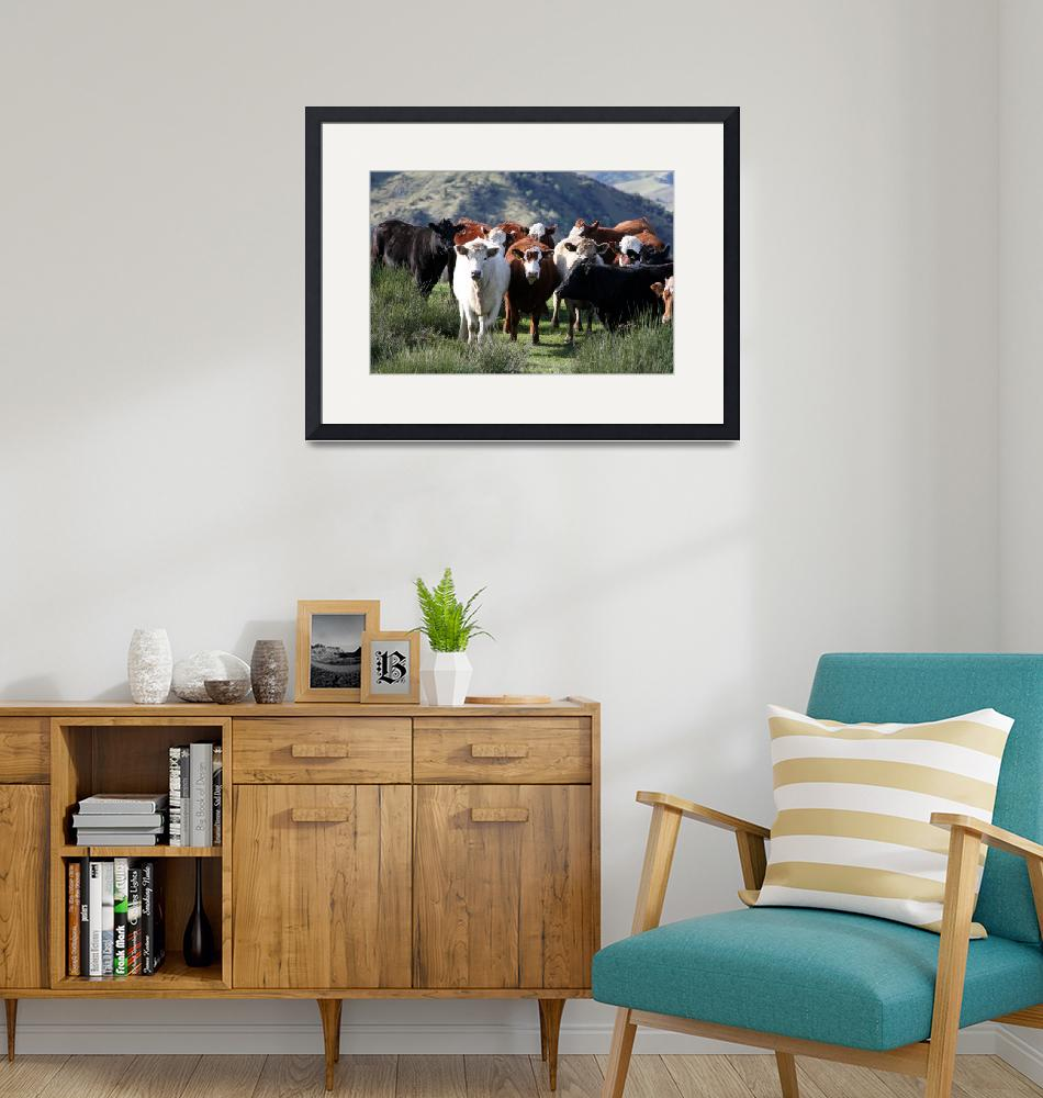"""""""Cows - New Zealand"""" (2006) by malcolmbowling"""