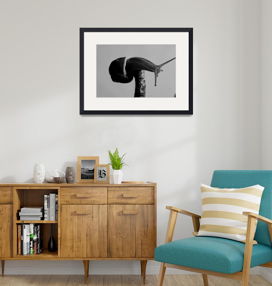 """""""A Mountaineer Snail""""  (2010) by mgarrido"""
