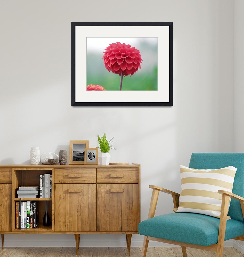 """""""Red Dahlia in Drizzle"""" (2018) by Zowauwart"""