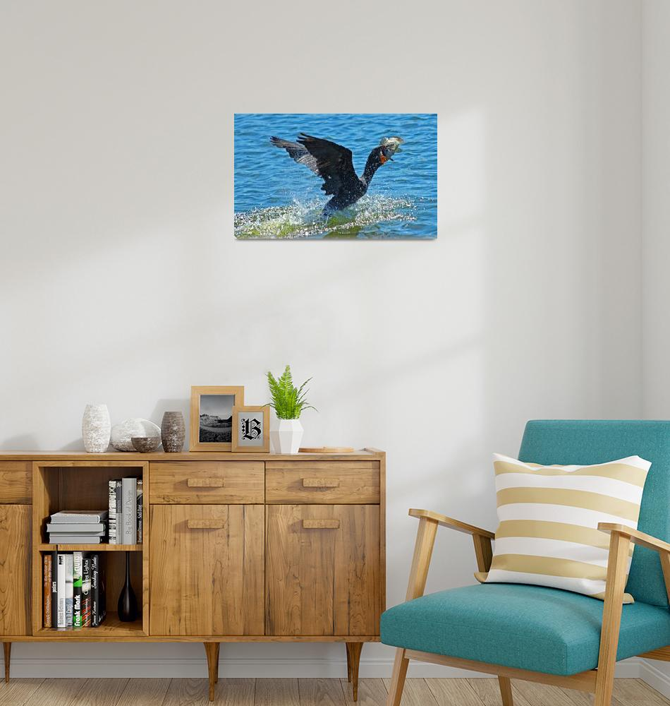 """""""Cormorant with Fish #1""""  (2010) by shelshots"""