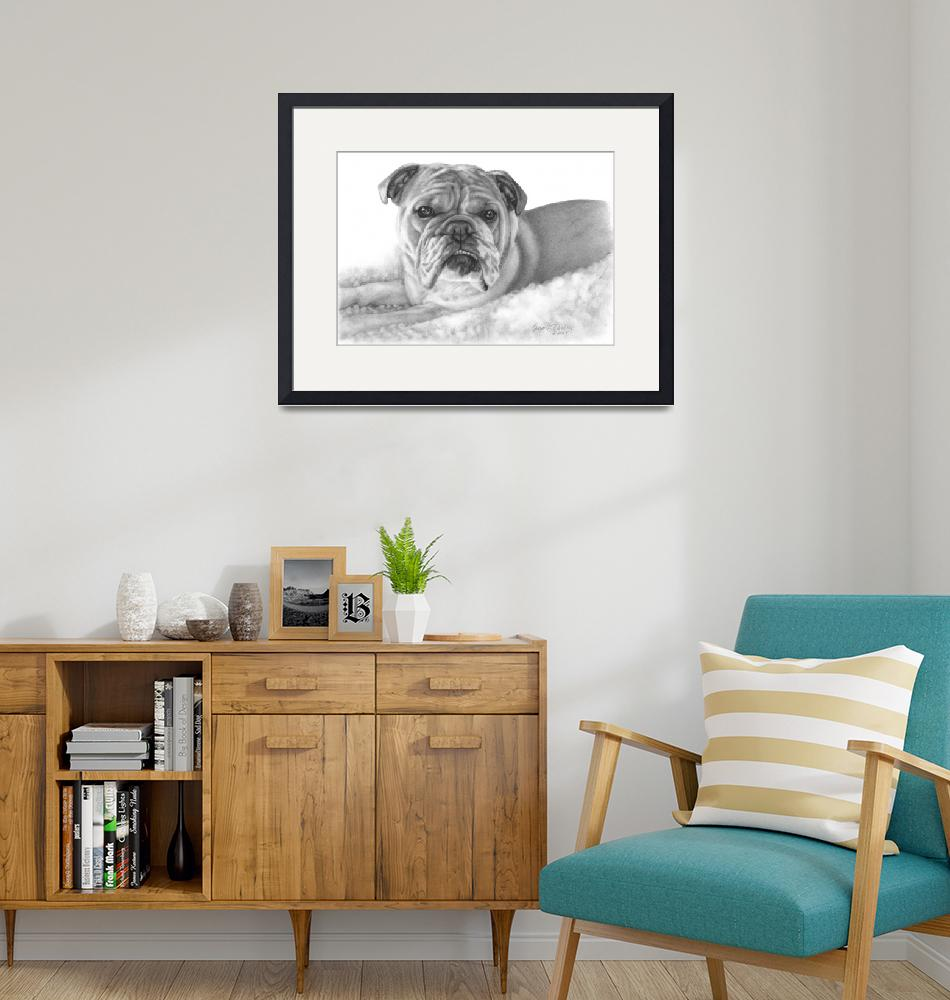 """Allie, English Bulldog""  (2008) by sdonley"